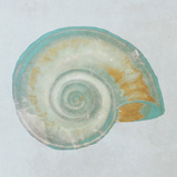 Teal Gold Seashell I Prints by Patricia Pinto