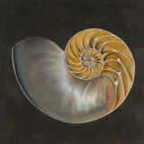 Seashell III Posters by Patricia Pinto