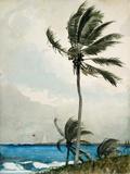 Palm Tree, Nassau, 1898 Print by Winslow Homer