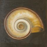 Seashell I Prints by Patricia Pinto