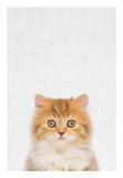 Kitten Prints