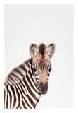 Baby Zebra Art