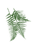 Green Ferns Mate Print by Jace Grey