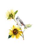 Titmouse with Sunflower, 2016 Giclee Print by John Keeling