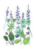 Wild Lupine Posters par Beverly Dyer