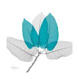 Ficus Burkey Teal Art by Albert Koetsier