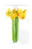 Daffodil Bunch, 2014 Giclee Print by John Keeling