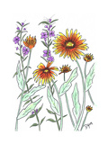 Common Blanket Flower Affiches par Beverly Dyer