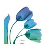 Tulips Turq Blue Print by Albert Koetsier