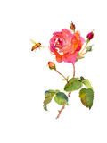 Rose with Bee, 2014 Giclee Print by John Keeling