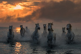 Camargue on Fire Photographic Print by Xavier Ortega