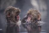 Venner Fotografisk tryk af Takeshi Marumoto