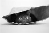Cat in a Bag Photographic Print by Jeremy Holthuysen