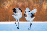The Dance of Love Photographic Print by C. Mei