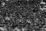 Wildebeest in Crossing Fotografisk trykk av Jun Zuo