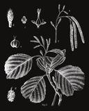 Botanicus Herba Impressão giclée por Maria Mendez