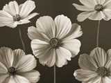 Cosmos Dance Giclee Print by Assaf Frank