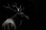 The Deer Soul Photographic Print by Massimo Mei