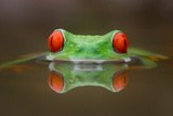 Burning Eyes Photographic Print by Kutub Uddin