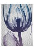 Aubergine Textiles 1 Print by Albert Koetsier