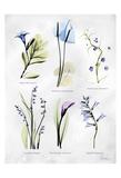 Vast Botanicals Print by Albert Koetsier