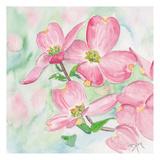 Pink Dogwood I Prints by Beverly Dyer
