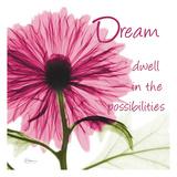 Pink Chrysanthemum Dream 2 Poster by Albert Koetsier