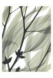 Eucalyptus Safari Poster by Albert Koetsier