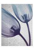 Aubergine Textiles 2 Prints by Albert Koetsier