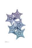 Lavender Splashed Starfish 1 Prints by Albert Koetsier