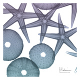 Lavender Dipped Starfish 2 Art by Albert Koetsier