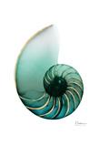 Shimmering Snail 4 Posters by Albert Koetsier