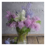 Lilacs Prints by Kimberly Allen