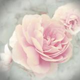 Belle Rose II Posters by Linda Wood