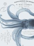 Sea Creatures - Almalfi Prints by Stephanie Monahan