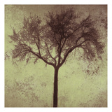 A Tree Silhouette Prints by Taylor Greene