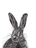 Hare Posters by Lucy Francis
