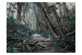 Path In The Forest 2 Prints by Vladimir Kostka