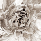 Cereus Aeonium - Fawn Prints by Tania Bello