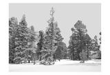 Forest Freeze BW Prints by Suzann & Frank Parker