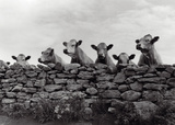 Over Herd Prints by Enrico Straub