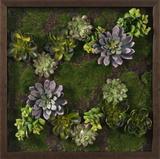 *Exclusive* Faux Succulent Lavender Mini Garden III * Dimensional Product