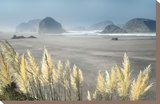 Pampas Beach Stretched Canvas Print by Dennis Frates