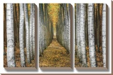 Tree Farm Stretched Canvas Print by Michael Cahill