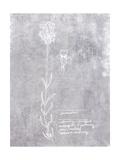 Essential Botanicals II Print by Jarman Fagalde