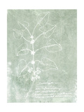 Essential Botanicals I Prints by Jarman Fagalde