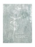 Essential Botanicals III Prints by Jarman Fagalde