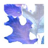 Xray Leaves II Print by Vision Studio