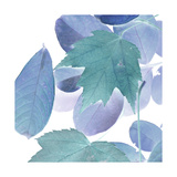 Xray Leaves III Prints by Vision Studio