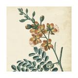 Garden Bounty III Prints by Vision Studio